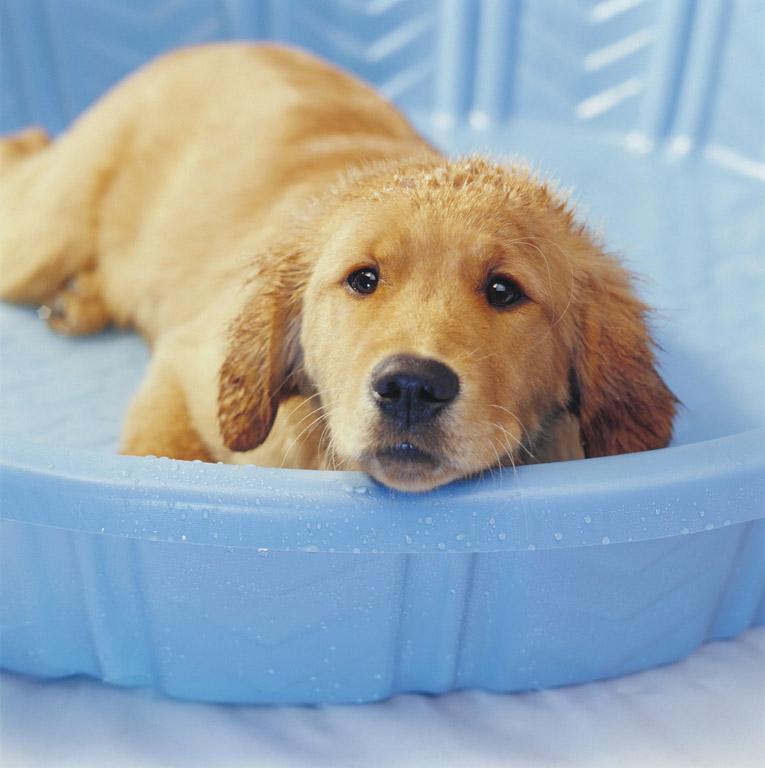 Dog Hydration 4