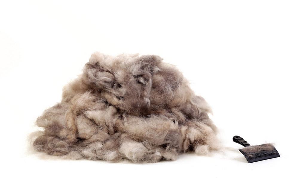 benefits of grooming 3